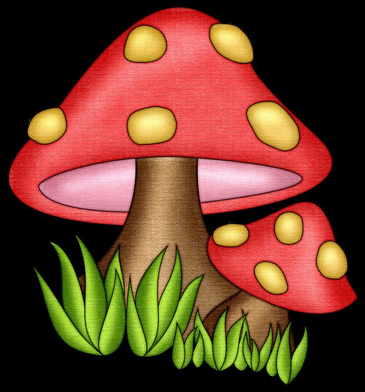 Andy video Mushrooms