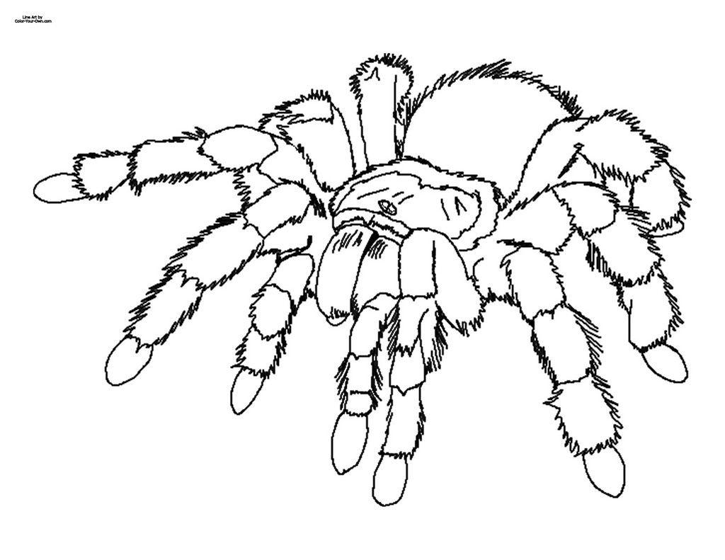 spinne ausmalbild 05 | Ausmalbilder | Pinterest | Spinne ...
