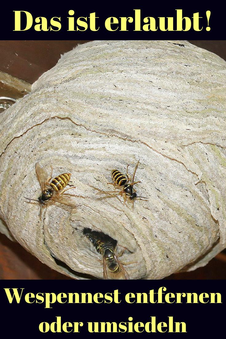 Erdbienen stechen for Konnen trauermucken stechen