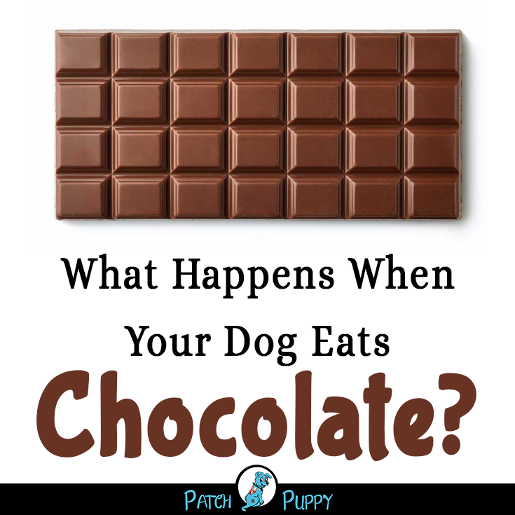Dog Chocolate Poisoning Timeline Dog Ate Chocolate Dog Eating