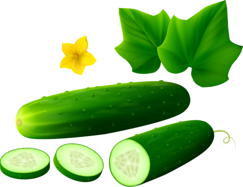 Cucumber on white background [преобразованный].png ...