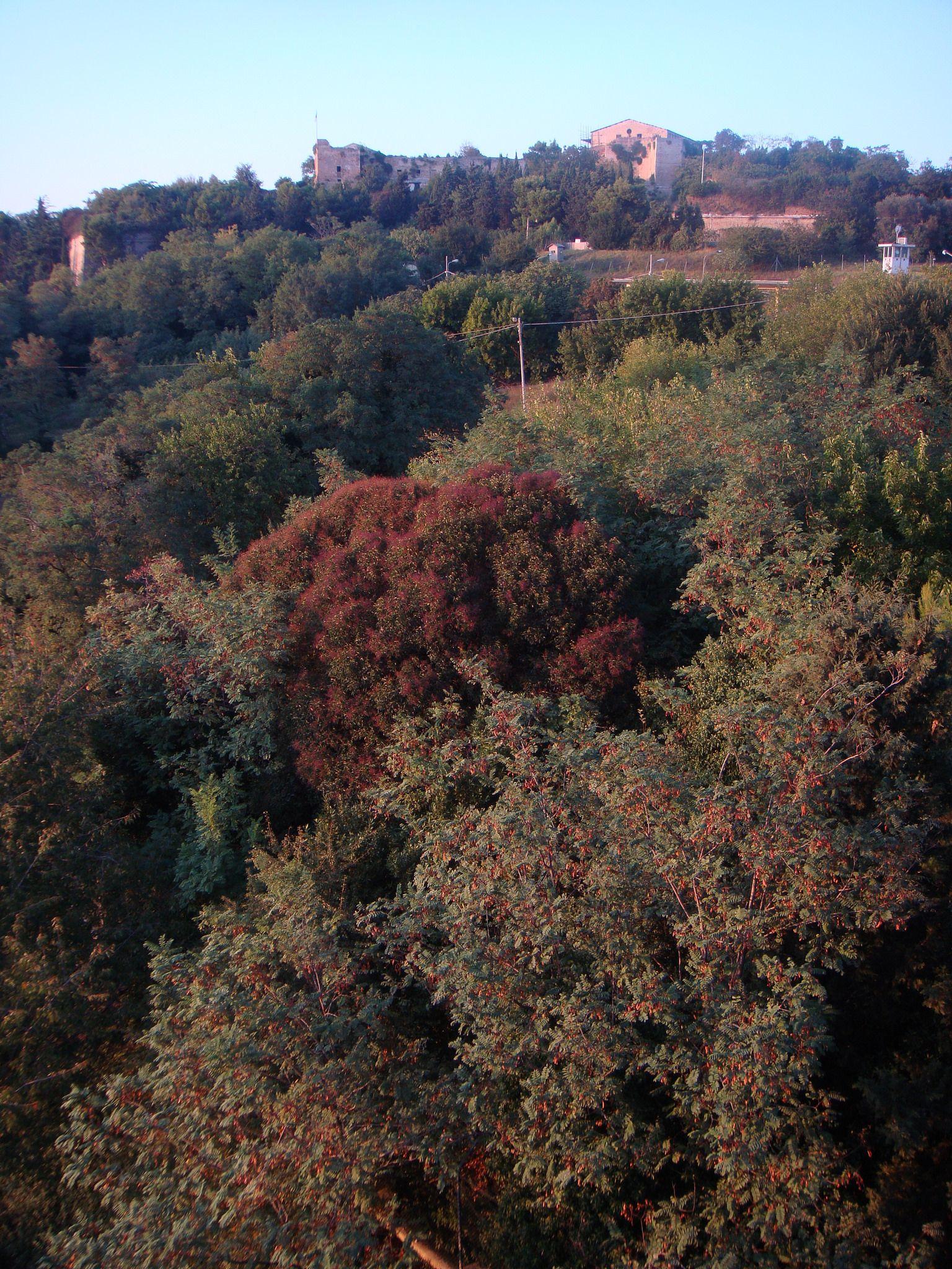 Ancona,Marche, Italy- Cittadella's Trees  in Autumn 2009 -by Gianni Del Bufalo (CC BY-NC-SA 2.0)