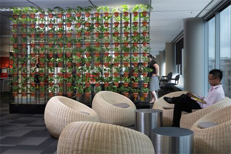 Breakout areas and meeting areas indoor plants displays from ambius