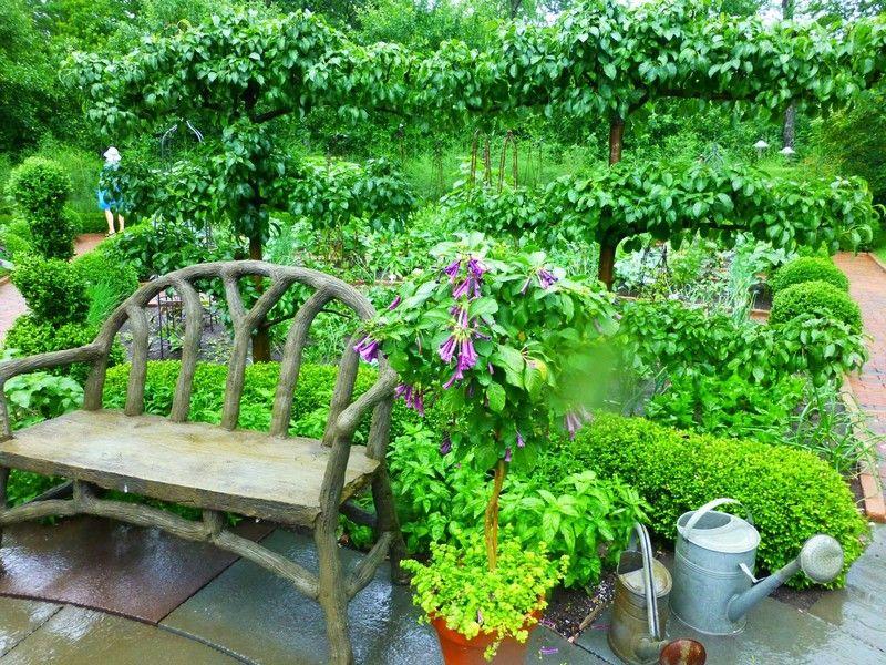 palmettes horizontales 2 tages sur terrasse un espalier ou palmette dans votre jardin. Black Bedroom Furniture Sets. Home Design Ideas