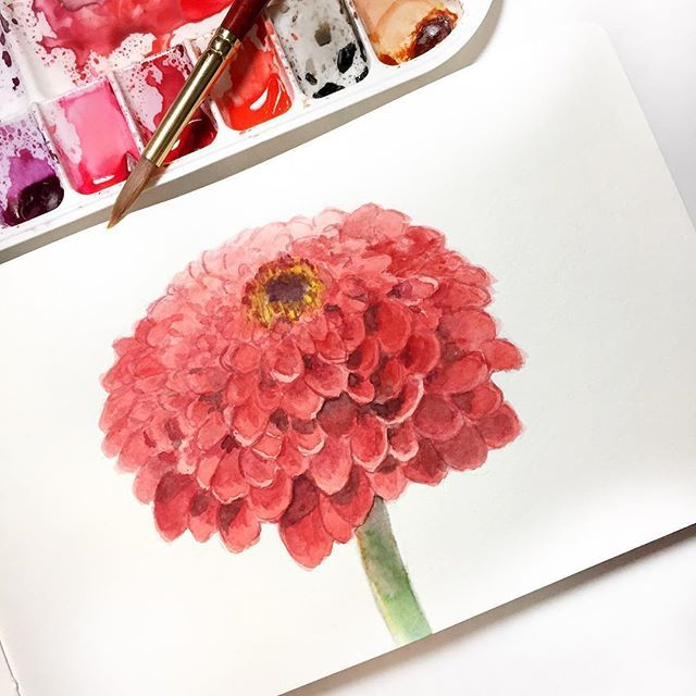 10/100 - Zinnia Love these gorgeous flowers - made me think of getting some for my garden so I can paint them all summer long. #the100dayproject #100daysofwatercolorflowers