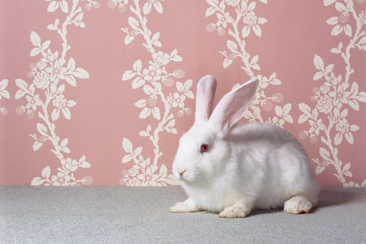 How you can litter train your rabbit pet rabbit bunny
