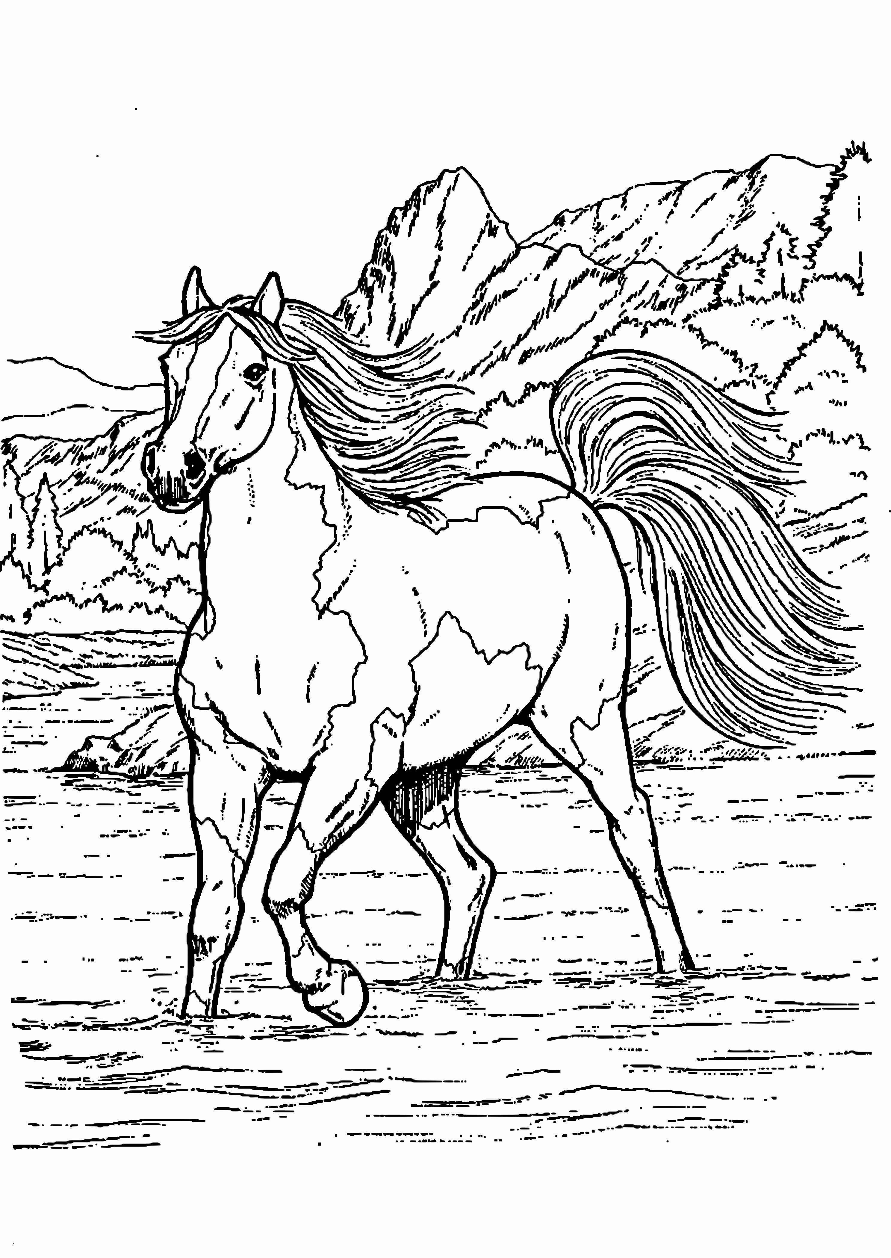 53 Genial Ausmalbilder Pferde Mit Reiter Zum Ausdrucken
