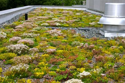 Nice Kemp Hall Green Roof, A Year Later U2013 The Scott Arboretumu0027s Garden Seeds