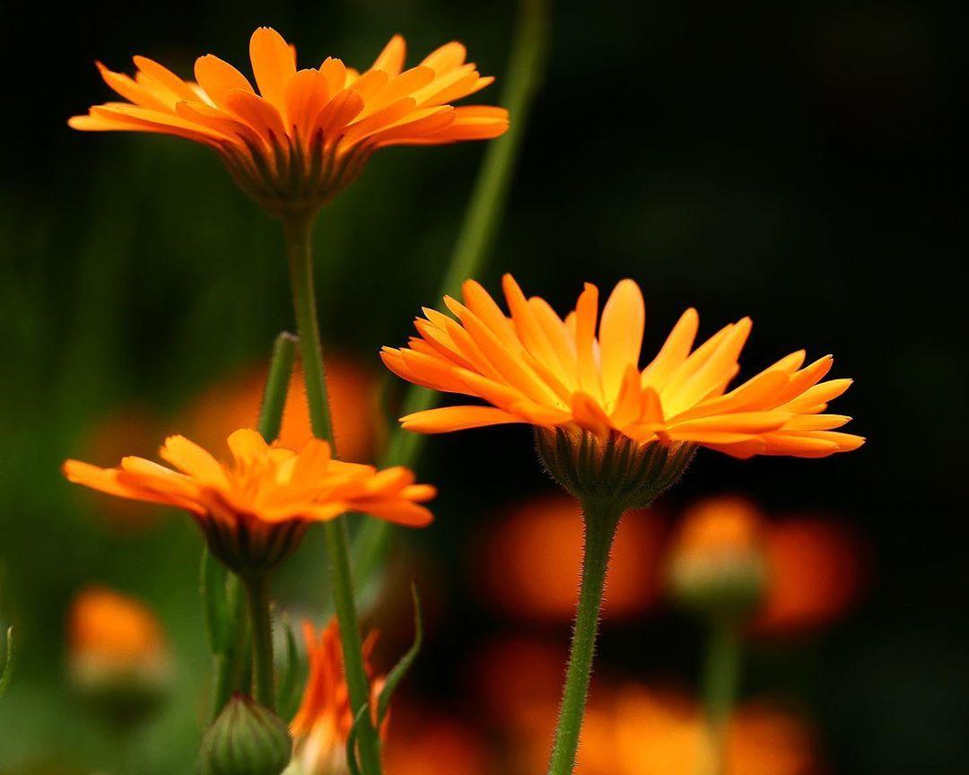 flower#flowerlove#flowerphotograpy#garden#flowerlover#gardenlover#garden#macro#Canon#hobby#photograper#nature#naturephotographer#macrolover#macrophotograper#hobbyphotographer