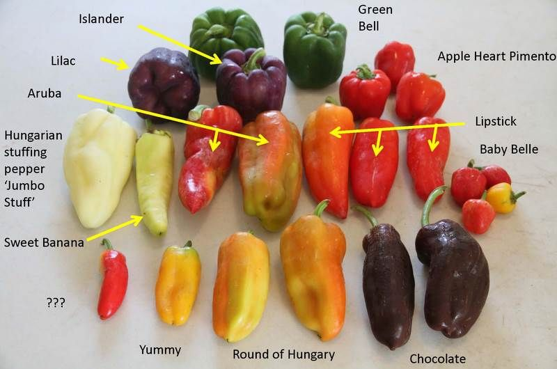 Peppers Sweet And Heat Yard And Garden News University Of Minnesota Extension Stuffed Peppers Stuffed Sweet Peppers Hot Pepper Recipes