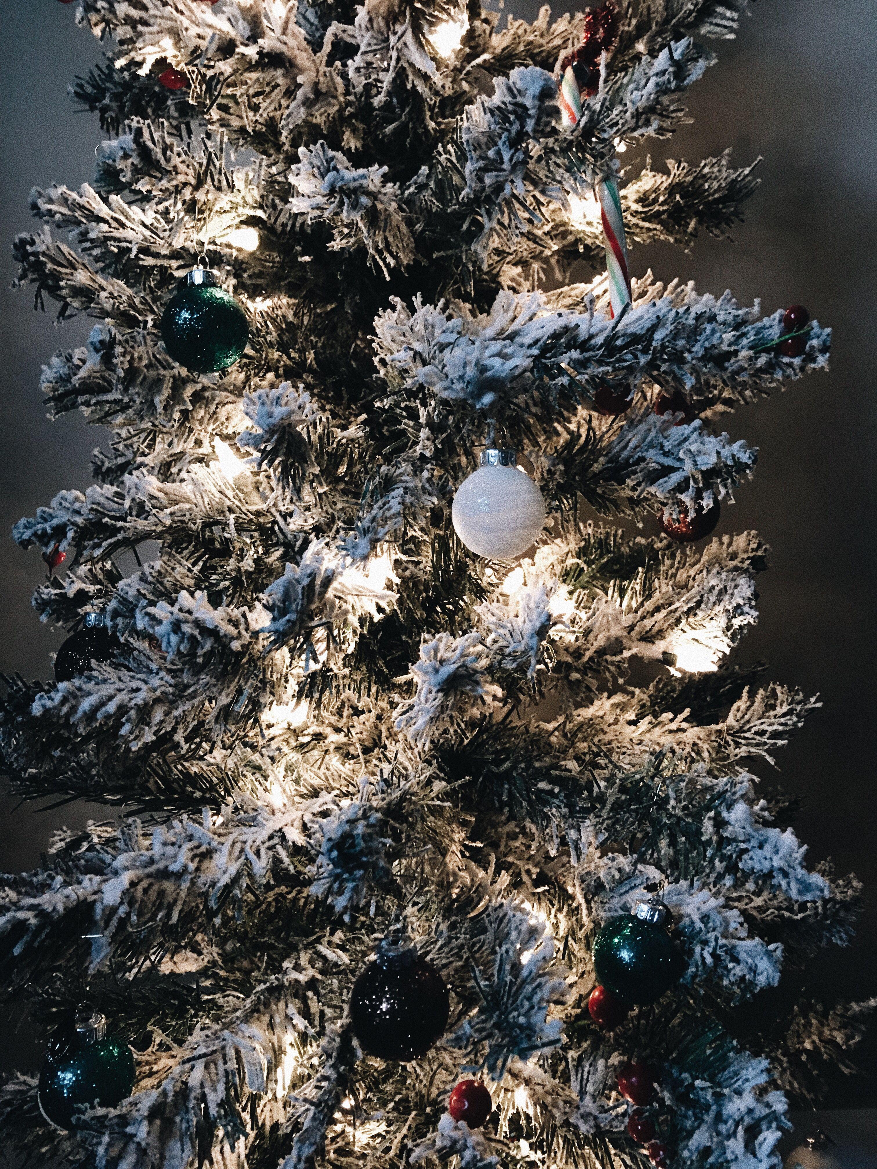 christmas tree season!! Christmas tree, Christmas, Tree