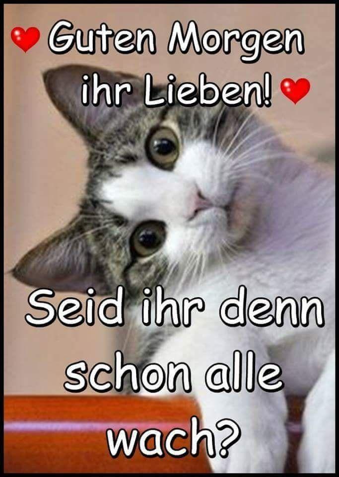 Netzfund Guten Morgen Katze Guten Morgen Lustig Und Funny