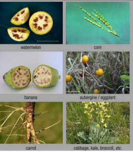 How Your Food Would Look If Not Genetically Modified Over