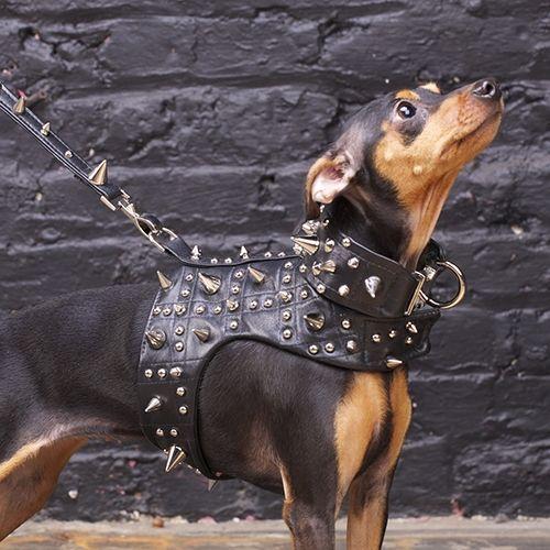 Noir Heavy Metal Dog Harness Vest By Chien Coature 413 Dog