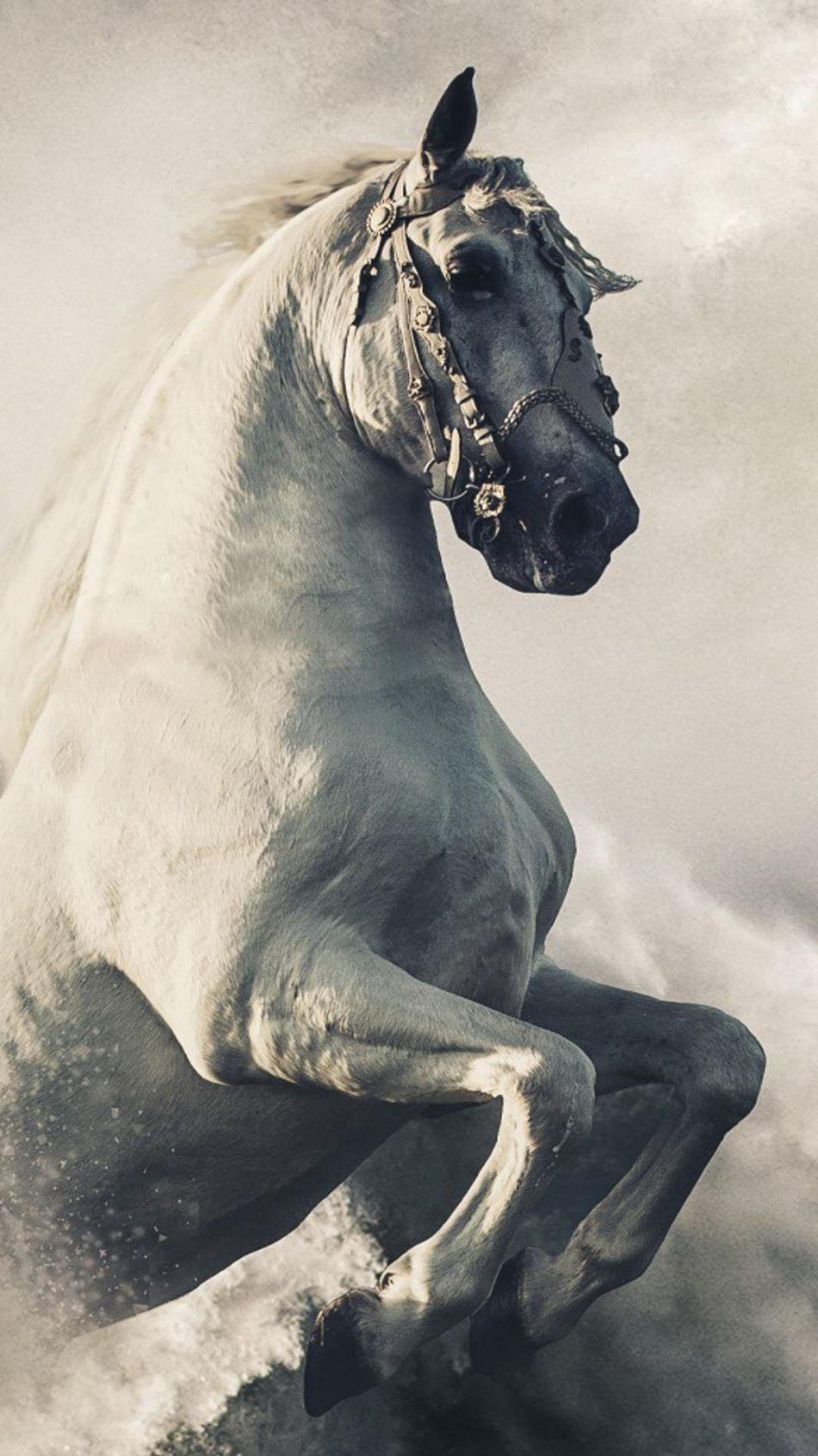Pegasus White Horse 4k Ultra Hd Mobile Wallpaper Horse Wallpaper Horses Horses In Snow
