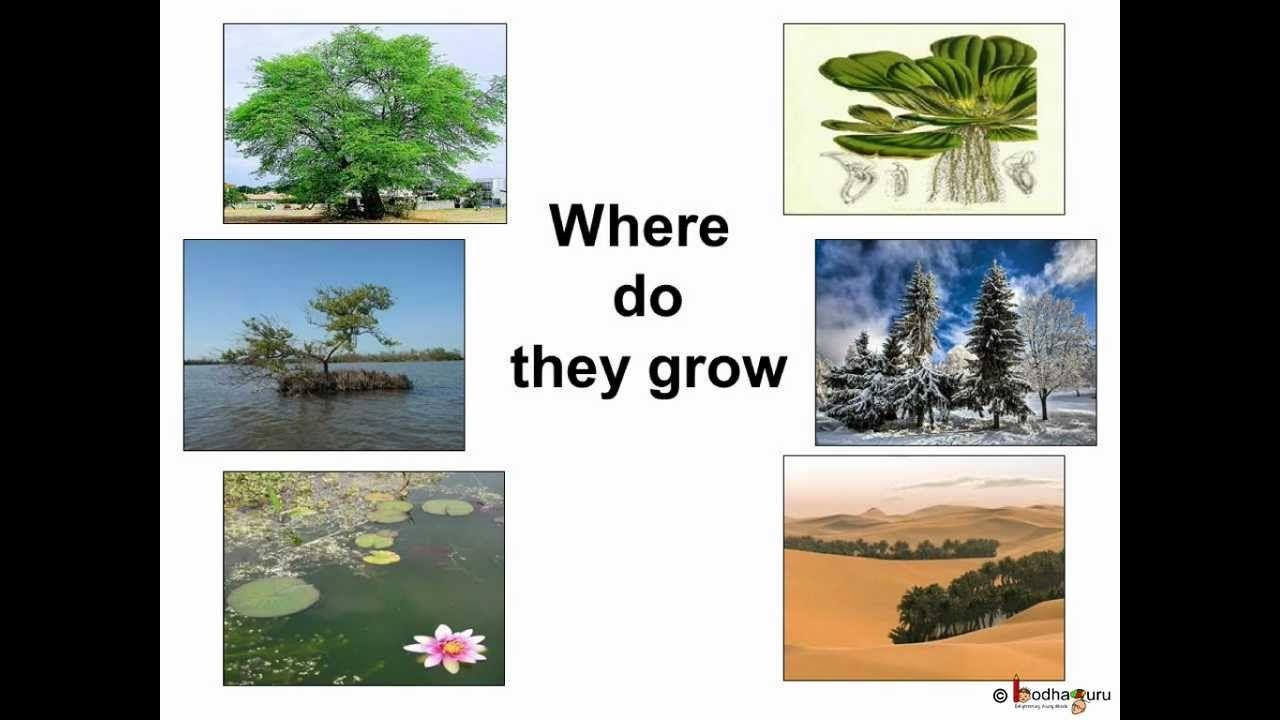 Science Plant Habitat And Adaptation English Plant Science Plants Plants Unit [ 720 x 1280 Pixel ]