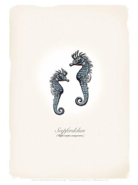 Seepferdchen+von+ART11+auf+DaWanda.com