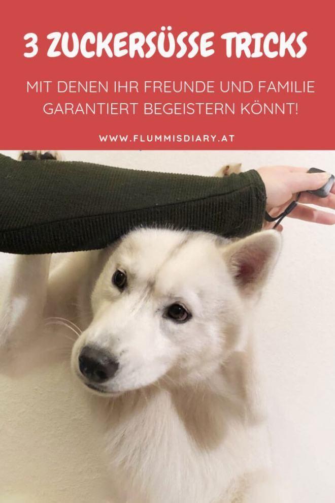 Photo of ▷ 3 trucos para perros para principiantes absolutos con los que tienes la garantía de impresionar -Diario de Flummi