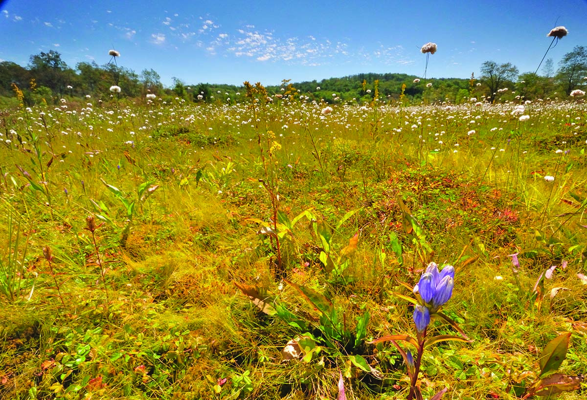 Pieces of a dream in Canaan Valley. By Ed Rehbein