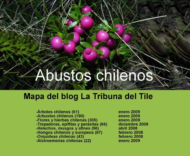 Arbustos chilenos chile flora pinterest flora - Arbustos nombres ...