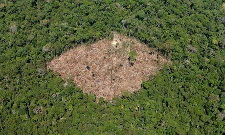 Amazon Deforestation Falls Again Quick Read Amazon Rainforest