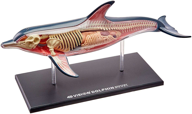 Único Aleta De Tiburón Anatomía Patrón - Anatomía de Las Imágenesdel ...