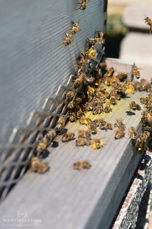 Common Backyard Beekeeping Terms   Rocky Hedge Farm in ...