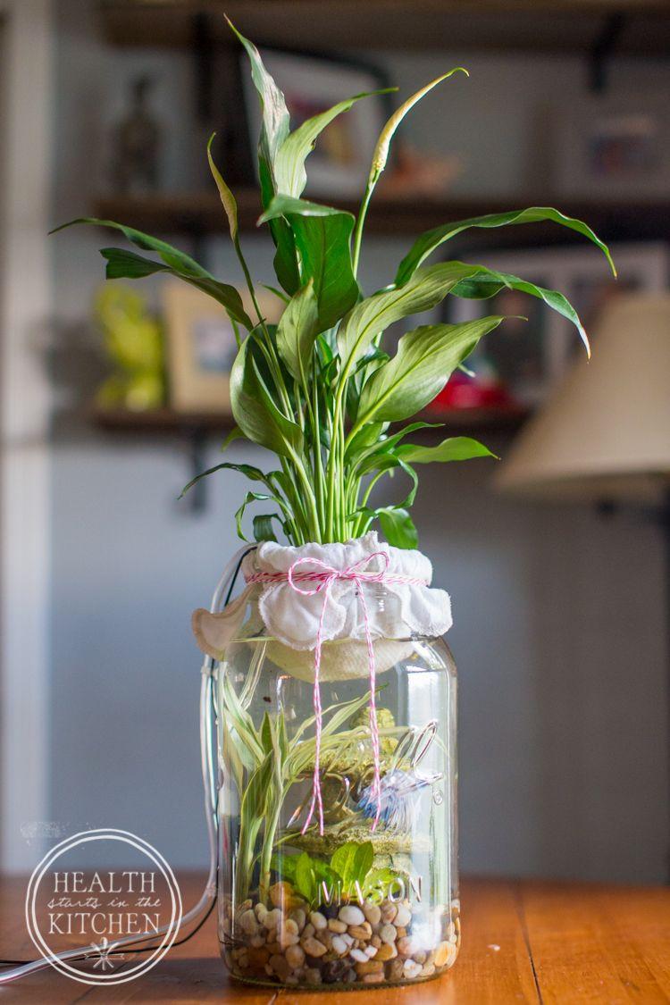 Diy selfcleaning canning jar aquarium pinterest beta fish