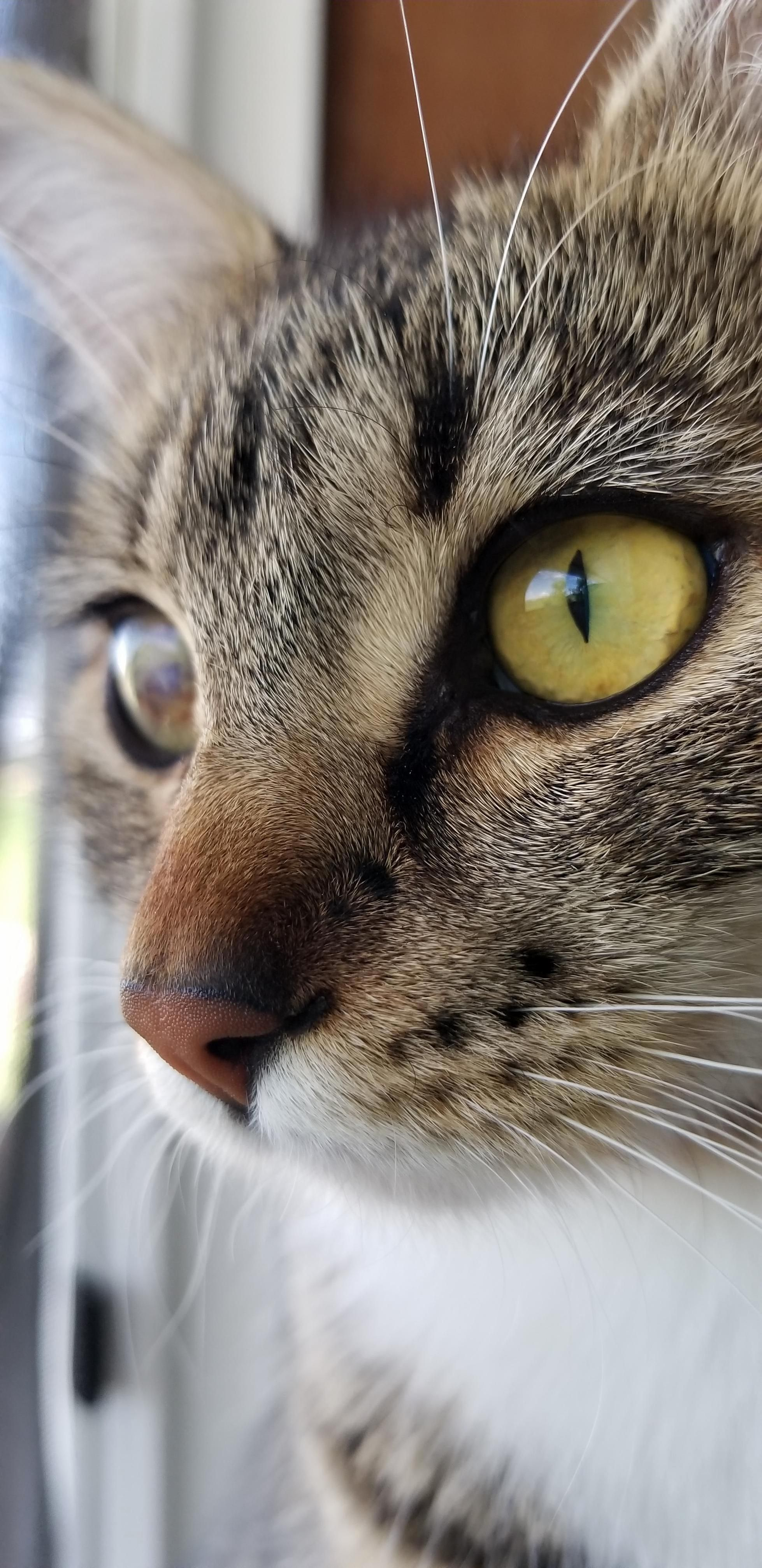 Might Only Have One Good Eye But She Is Quite The Hunter Cute Cats Hq Pictures Of Cute Cats And Kittens Free Pictures Of Funny Cats And Photo Of Cute