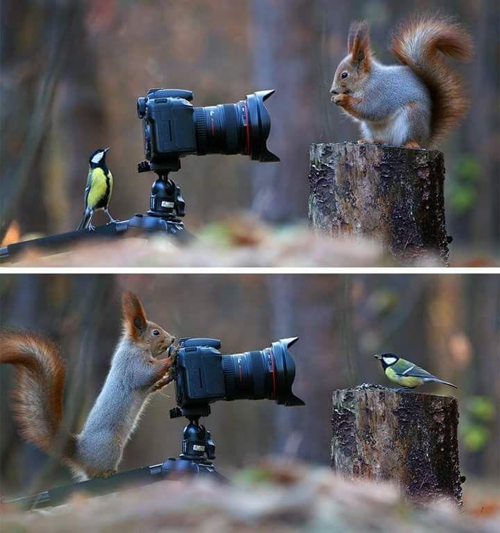 (24) Твиттер   Смешные фотографии животных, Фотографии ...
