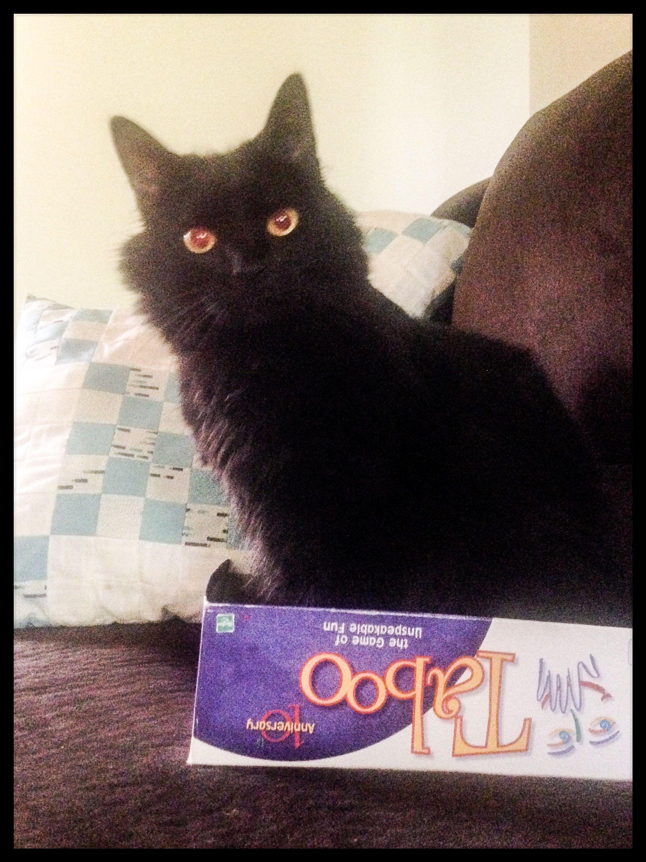 Black cat Salem in Taboo game lid.