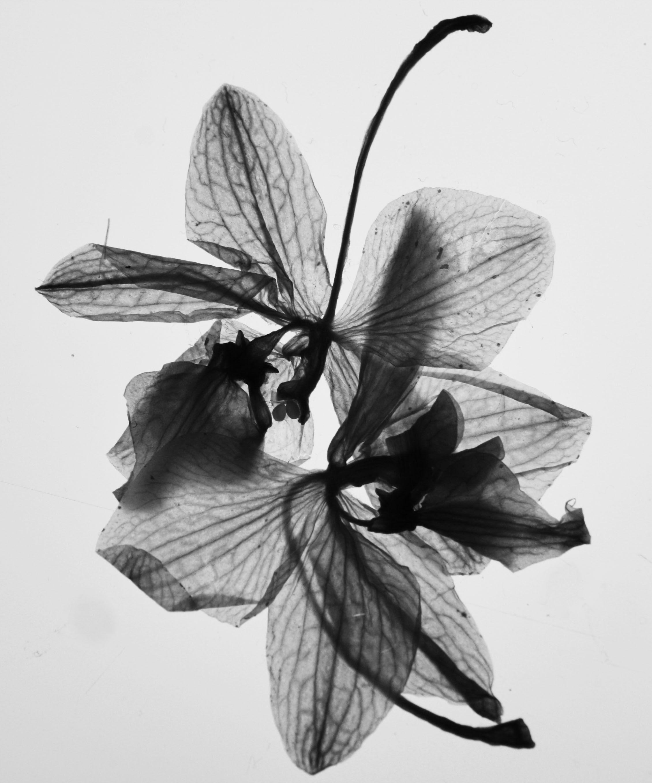 X Ray Flower Tattoo On The Left Inner Arm Tattoo Artist: Xray Flower, Wonderland Tattoo, Flower