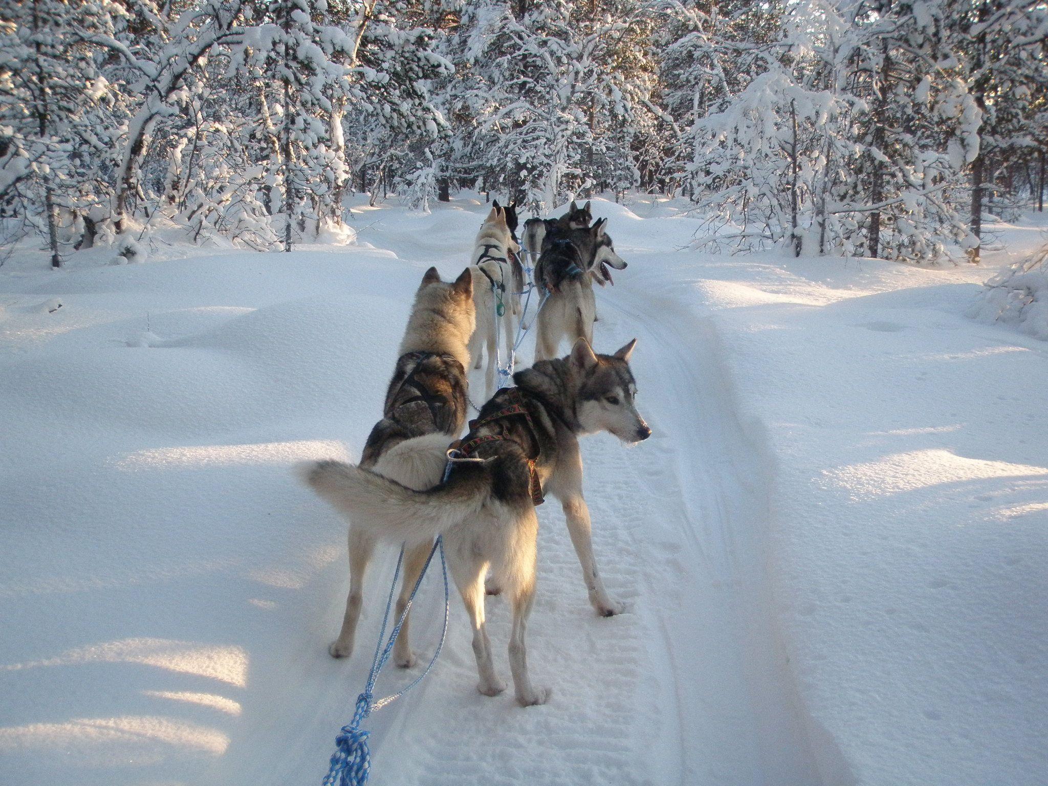 Siperia - Seikkailut lumessa