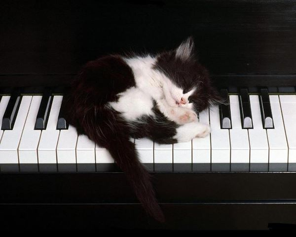 Probably skip the piano for today