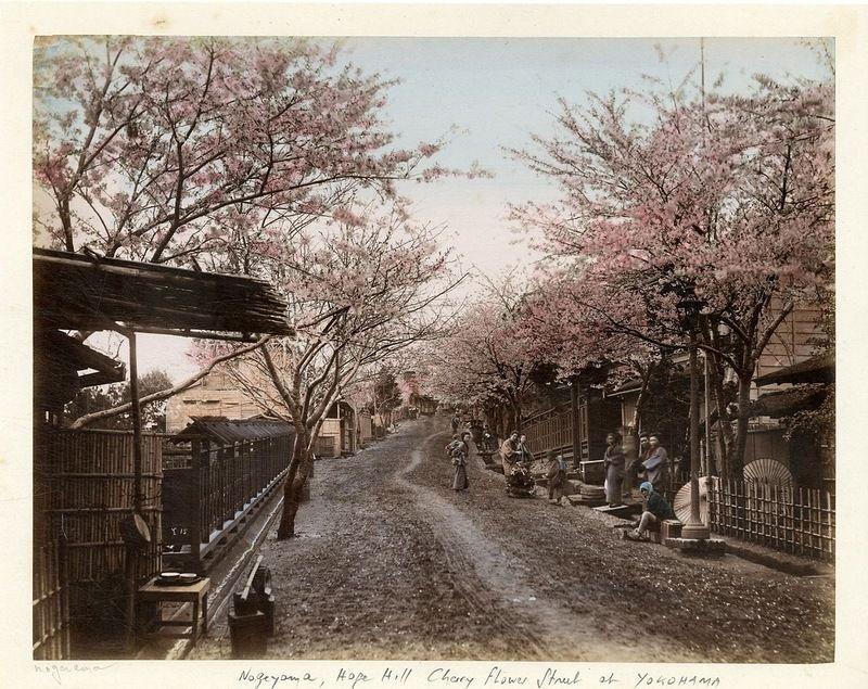 Иокогама, Цветение вишни на улицах города | Старые ...