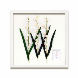 The Shellatier Collection - Framed Coquina Shell Delphiniums Pink
