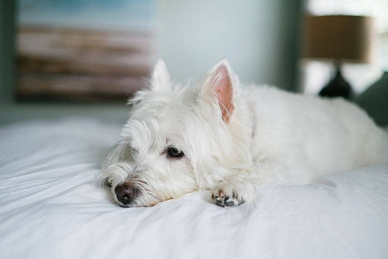 Pin By Jessa Robinson On It S A Dog S Life Dog Life Westies Hearth And Home