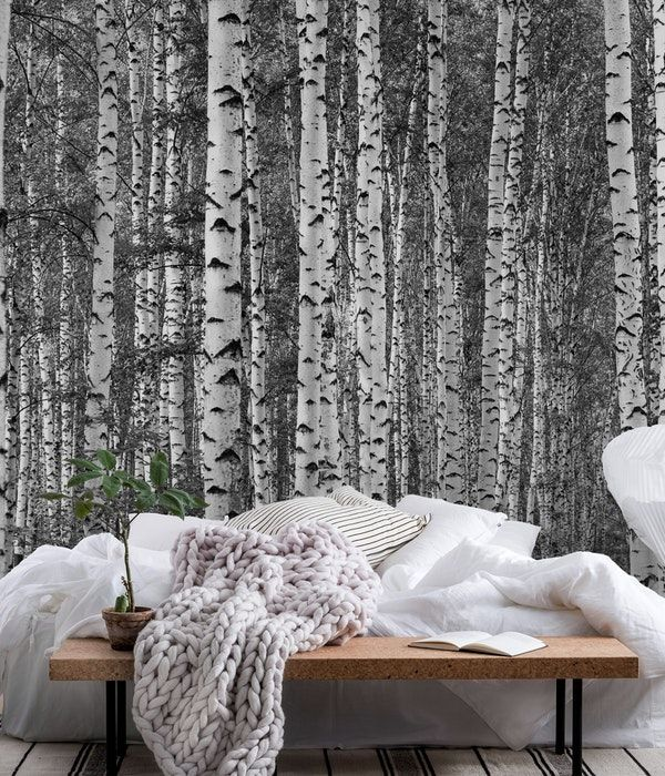Birch trees black and white xxl Wall mural | Tree wall ...