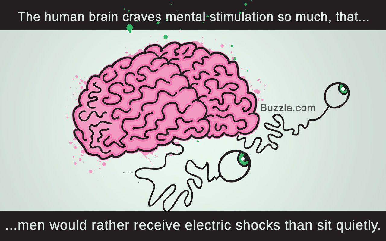 Facts On Human Brain Human Brain Human Facts