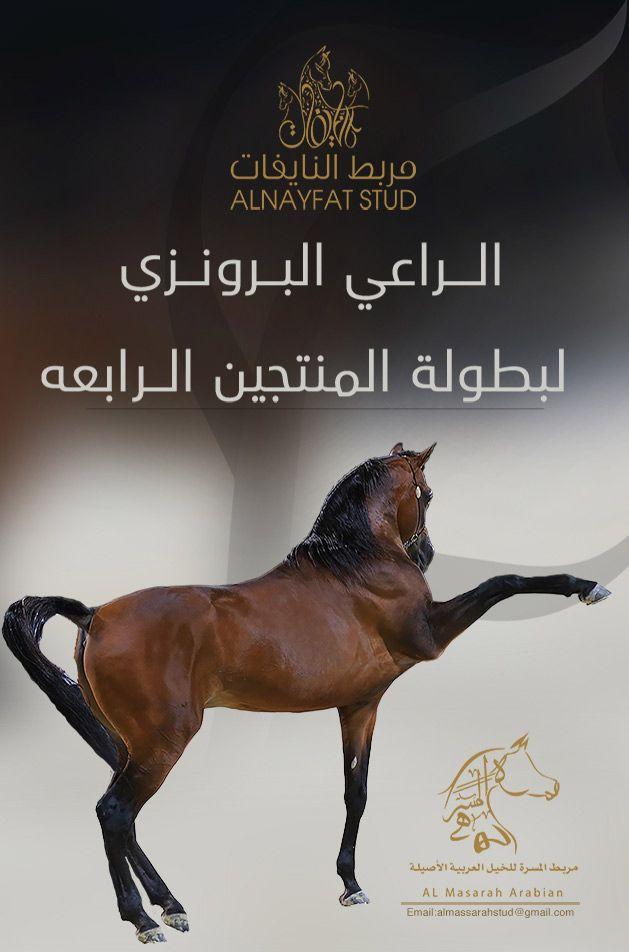مربط النايفات الراعي البرونزي لبطولة المنتجين الرابعه Horses Arabians Arabian Horse