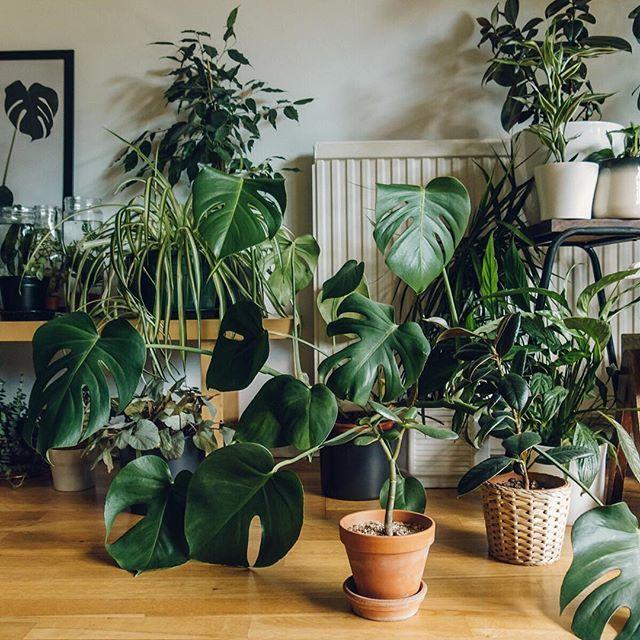 Cheap And Chic Living Room Decor Ideas: I N S T A G R A M @EmilyMohsie