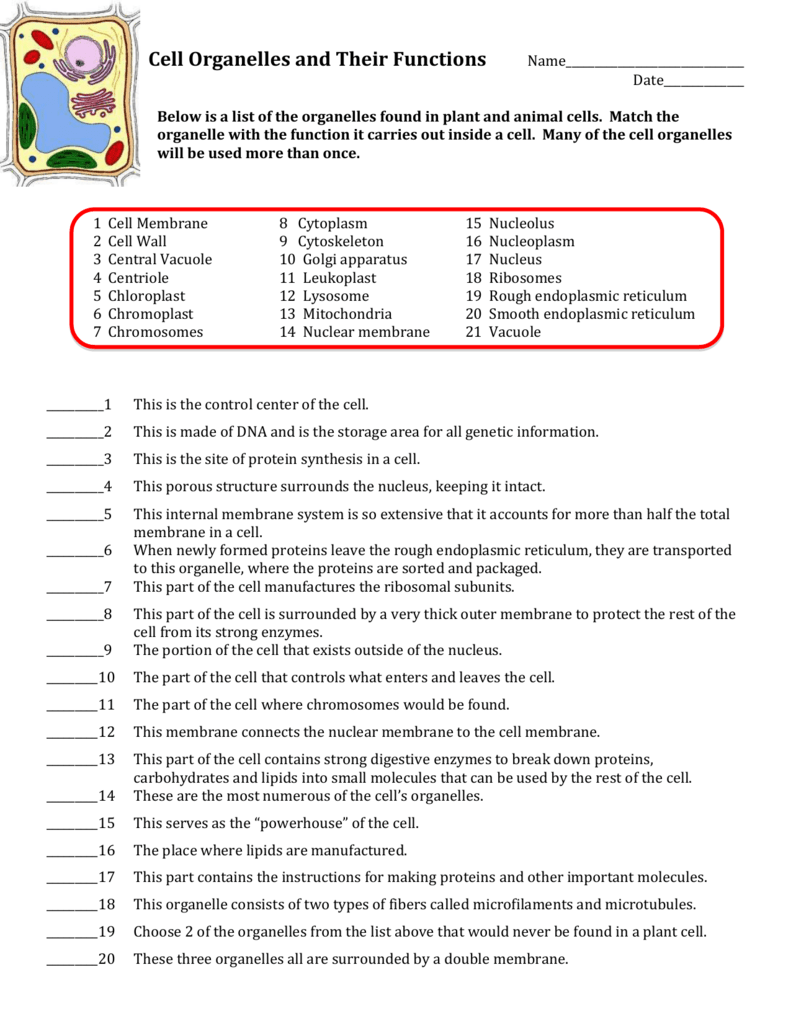 Cell Organelles And Their Functions Worksheets Answers Cell Organelles Organelles Biology Worksheet