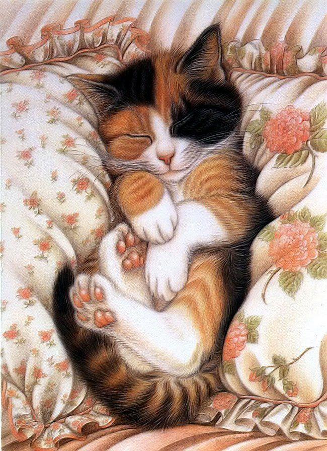Днем, кот спит открытка