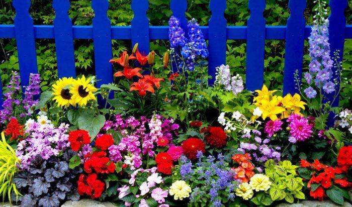 gartenpflanzen sommerblumen pflanzenideen garten Blumen und - gartenpflanzen