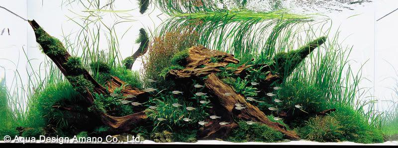 Ryuuboku (driftwood) Aqua Scape (T. Amano)
