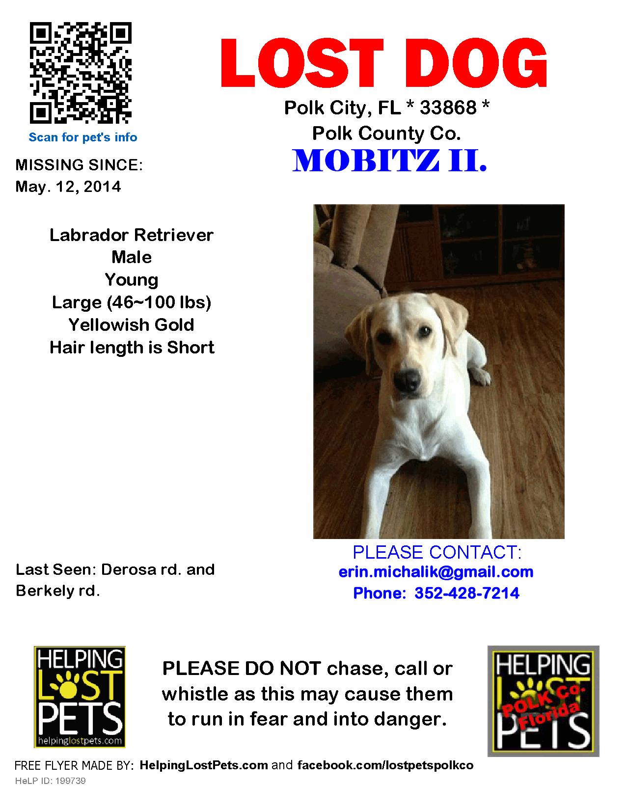 Lostdog Polk County Fl Polk City Http Www Helpinglostpets Com Petdetail Id 199739 Losing A Dog Polk County Polk