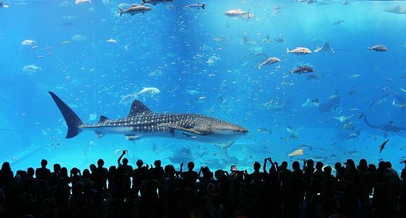 I Love Aquariums But I Dont Like Owning Fish Haha