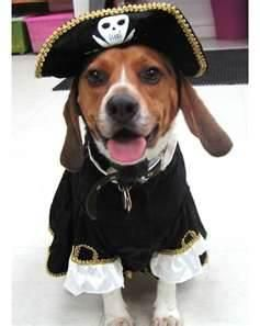 Shiver Me Timbers Halloween Animals Dog Halloween Costumes