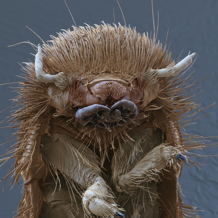 Ten Tiny But Terrifying Micro Monsters Cosmos Magazine Monster Under The Bed Macro Photography Insects Weird Animals