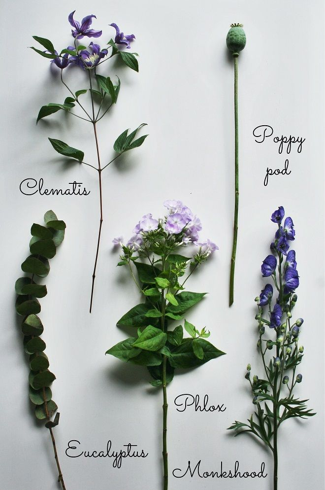 Summer bouquets - Cloverhome.nl Clematis, poppy pod, eucalyptis, phlox, monkshood #flowers #summerbouquet #purple